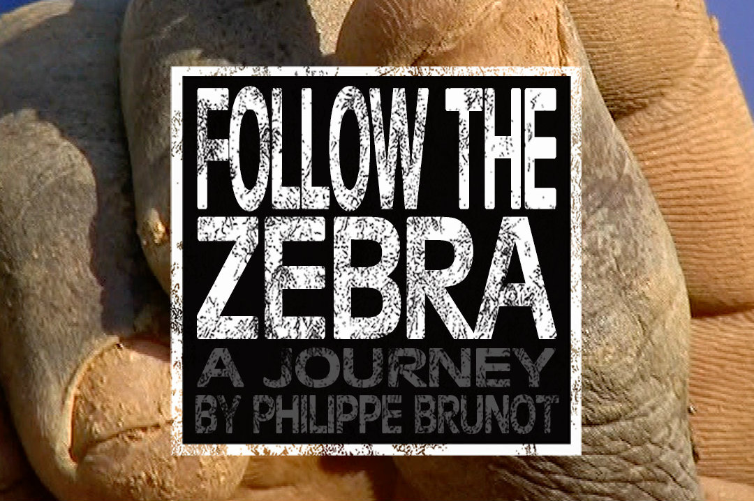 Documentaire ''Follow the Zebra'' - Version française